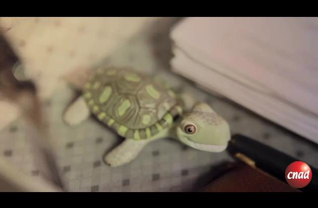 巴西旅游网站广告龟龟的旅程篇